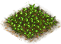 Flowerbed-green-salat.png
